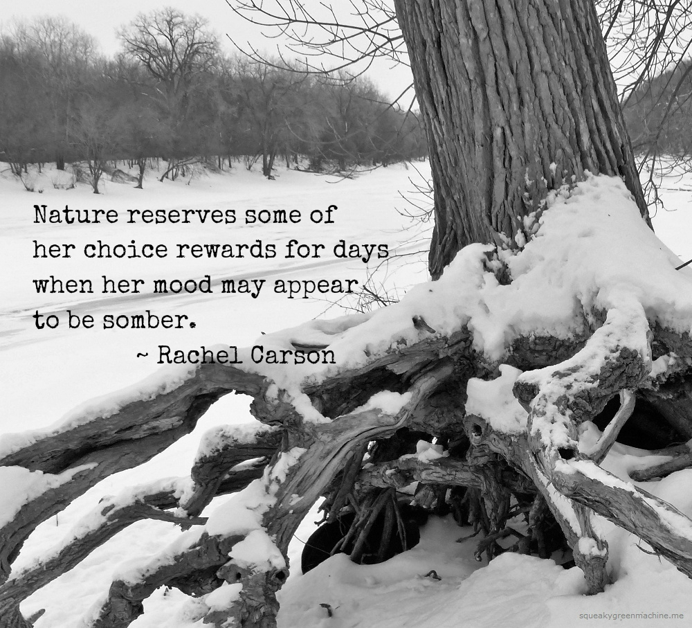 Rachel Carson quote with snowy tree: Nature reserves some of her choice rewards for days when her mood may appear to be somber.