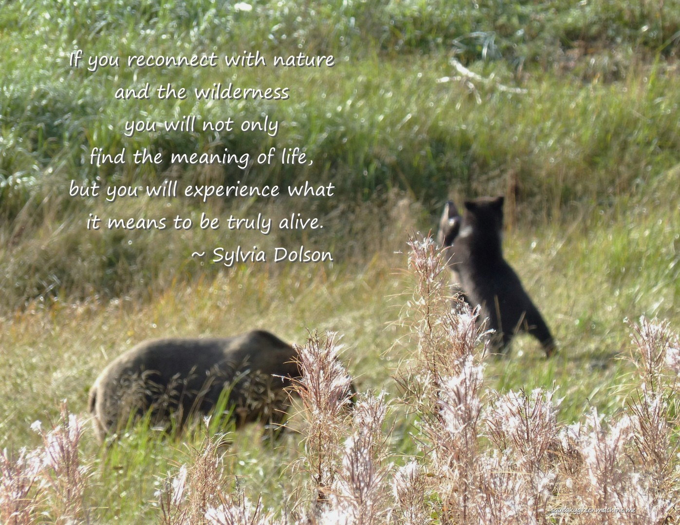 "Bears with Sylvia Dolson quote ""If you reconnect with nature and the wilderness you will not only find the meaning of life, but you will experience what it means to be truly alive."""